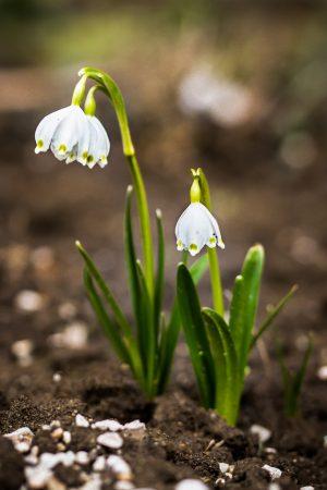 Klíma a rastlinstvo na Zemplínskej šírave
