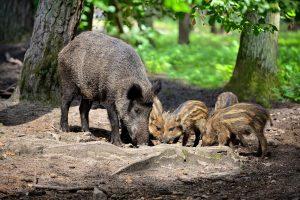 Živočíšstvo na Zemplínskej šírave