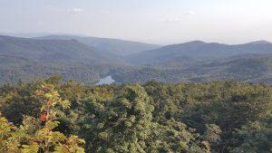 Vihorlatský prales