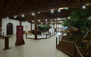 Expozícia poľovníctva a ochrany zveri Múzeum Trebišov