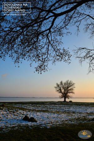 Osamelý strom, ikona Šíravy …